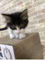 新しい家族 ネコ