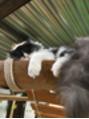 猫ネコねこにゃんこニャン