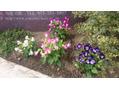 可愛いお花たち