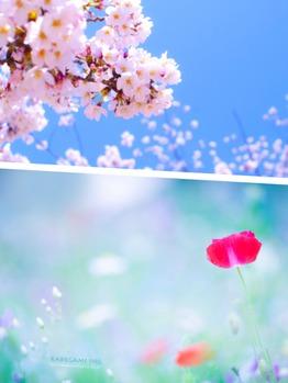 春♪_20160304_1
