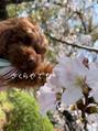 おリズ様とお花