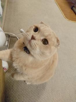 猫ブーム_20160301_1