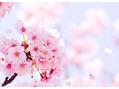 春のイメチェンメニュー☆