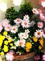 ☆春の楽しみ方~☆