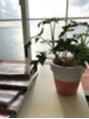 ☆植物ブログ☆
