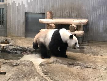 上野動物園_20170723_1