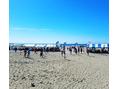 # beach volleyball