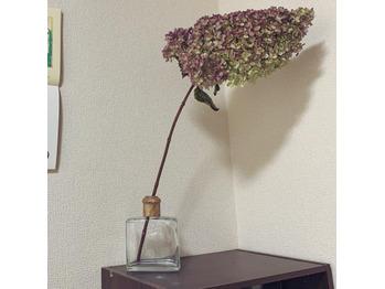 紫陽花もドライフラワーに_20200717_1