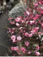 外は雪 平沢は晴れ 九日(土)空きあります。