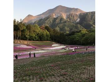 埼玉の秩父に芝桜見に行ってきましたー!_20170507_1