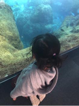 水族館へ_20200226_1
