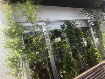 お店の前の木新しくなりました! 【淵野辺】_20180514_1