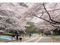 駒沢公園で感じた春