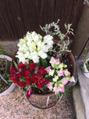 鉢植えの花を植えかえました