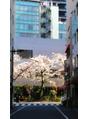 銀座一丁目の桜