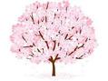 桜があと少しで開花!(^^)!