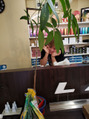 ランプカイタ(LAMP KAITA)パキラって植物!!