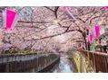 目黒川でお花見