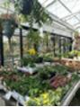 おすすめの観葉植物のお店