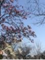 春の息吹。