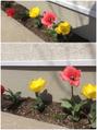 春が来た☆