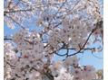 4月の空き状況(^^)d