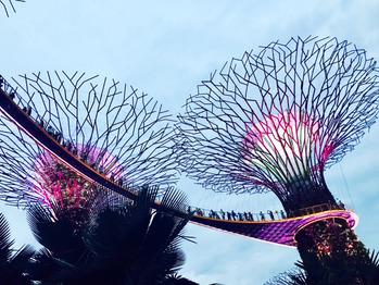シンガポール_20170211_2
