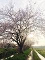 春分の日!