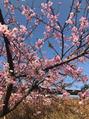 もう四月♪春ですね!