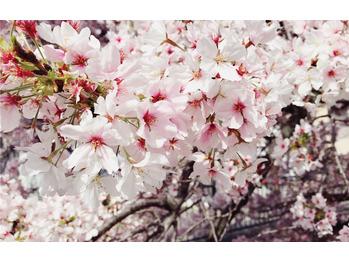 4月のANCHOR(^O^)/