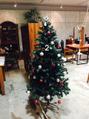 クリスマスツリー登場