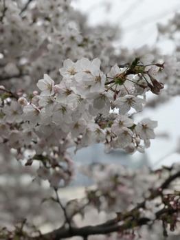 春_20180328_1