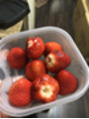 イチゴの季節!