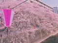 桜見てきました!