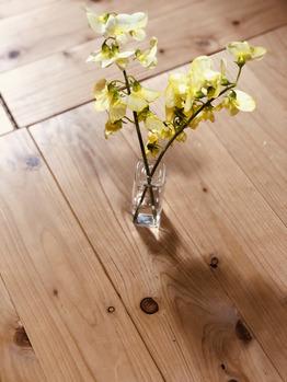 春の花とかとか、、、_20190425_1