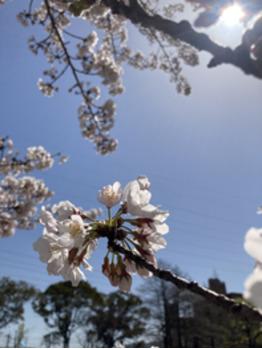 お花_20210630_1