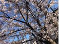 春です\(^-^)/