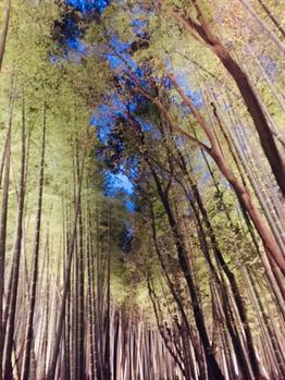 嵐山竹林ライトアップ★_20171218_1