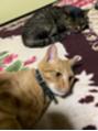 猫たちの楽園