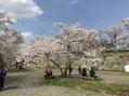 ☆☆ 今年の桜 ☆☆