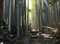 鎌倉巡りにて、、