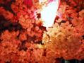 ★桜の季節★