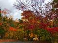 紅葉の時期。
