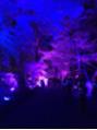 下鴨神社光のイベント