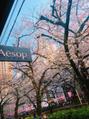 カラー講習と中目黒の桜