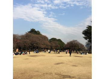 桜咲く_20170329_1