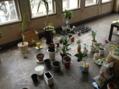 植物だらけ