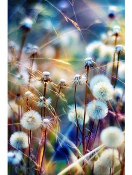 花粉症対策_20160207_1