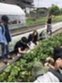 収穫体験付きBBQ 1