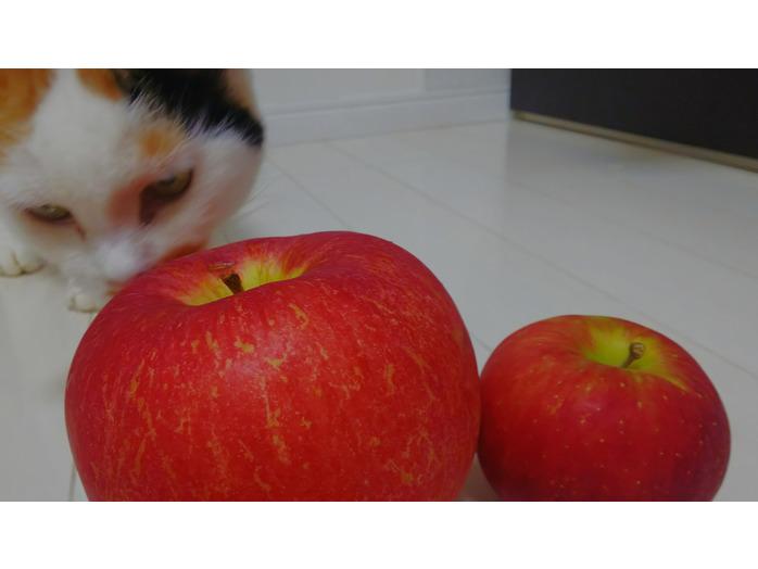 りんご_20191021_4